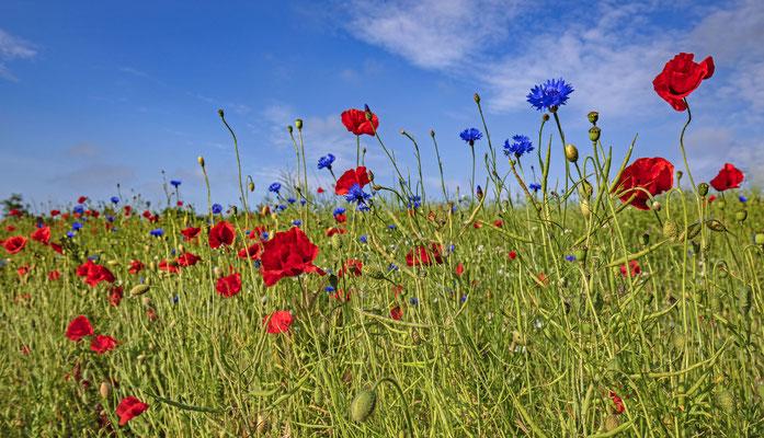 rot-blaue Felder