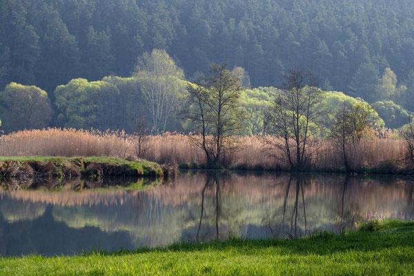 Frühling amWeiher, Foto: Annelies Neumann