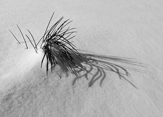 Schattenspiel, Foto: Helmut Meier