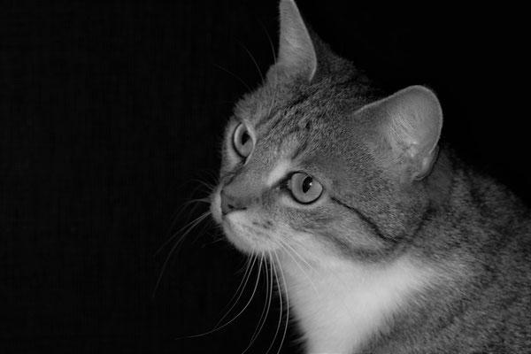Bild 08: Nachtmodus, Foto: Margarete Czichon