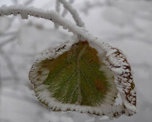 Bild 05: Letzte Farben, Foto: Annelies Neumann
