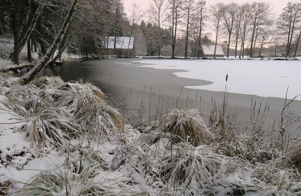 Winter am Weiher, Foto: Annelies Neumann