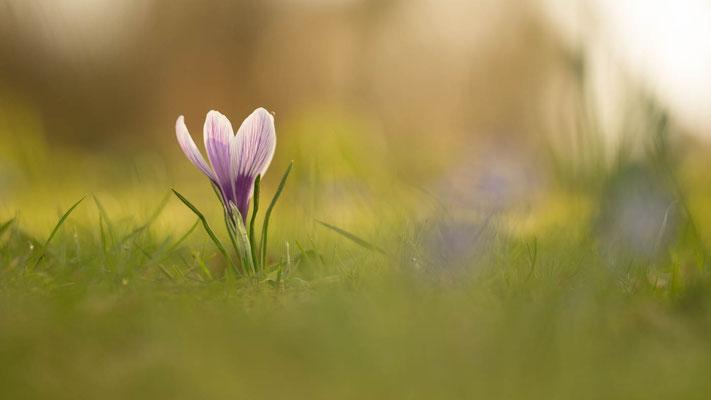 Frühlingserwachen, Foto: Sebastian Reiter