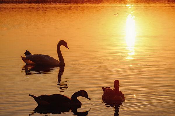 Sunset, Foto: Heiko Prechtl