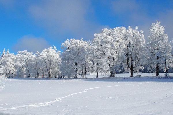 Bild 08: Wintermorgen; Foto: Annelies Neumann