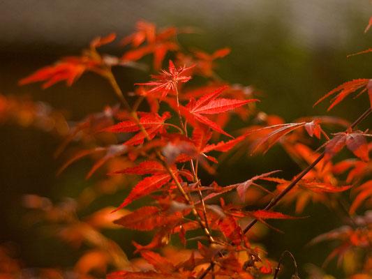 Roter Oktober, Foto: Christina Bäumler