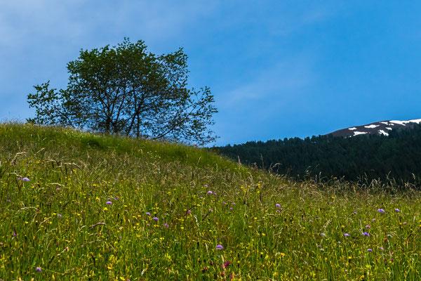 Faszination - Bergwiese, Foto: Rosi Polland