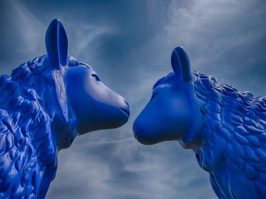 Bild 02; Blaue Schafe, Foto: Elke Englmaier