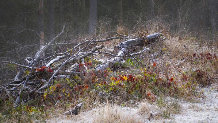 Bild 01: Der erste Frost, Foto: Josef Beinrucker