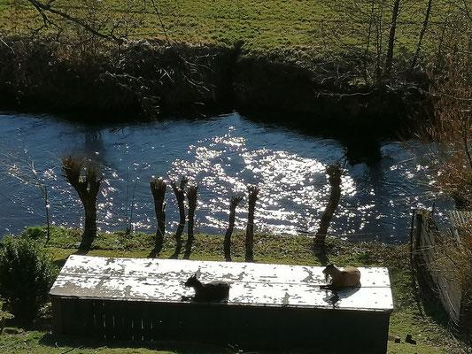 Bild 04: Frühlingssonne an der Naab, Foto: Richard Winter