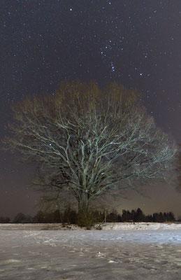 Eiche in der Winternacht, Foto: Sebastian Reiter