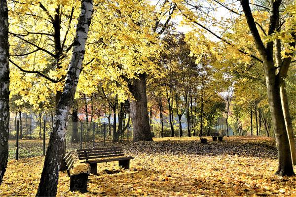 Herbstwald, Foto: Margareta Czichon