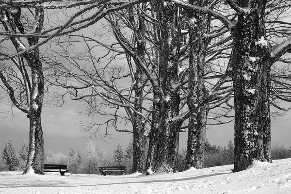 Winter auf dem Fahrenberg, Foto: Josef Beinrucker