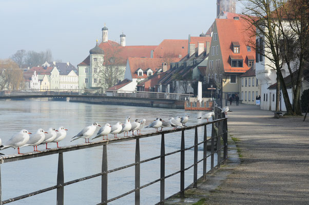 Landshut, Foto: Beppo Popp