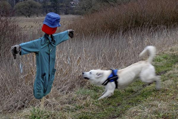 Bild 01: Mensch und Tier