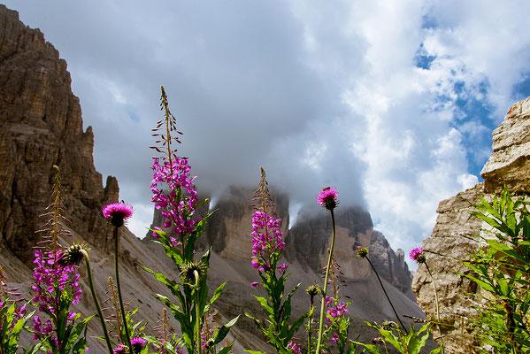 Bergblumen, Foto: Bernhard Lang