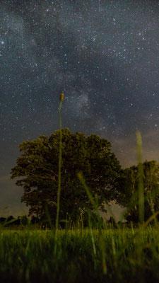 Milkyway, Foto: Sebastian Reiter