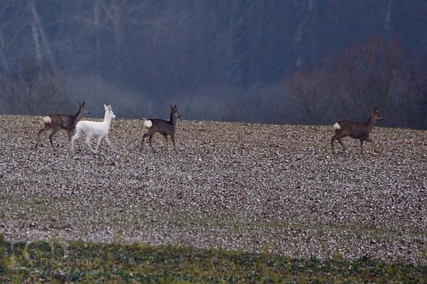 nicht nur Schnee ist weis, Foto: Alfred Voss