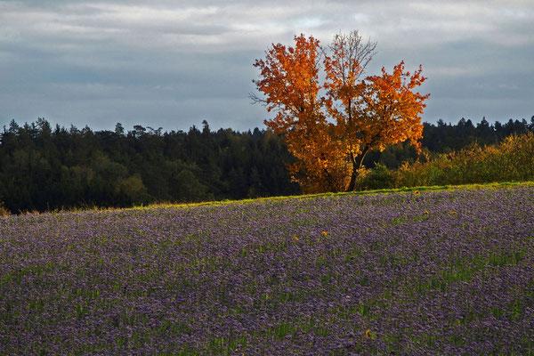 Letzte Blüte, Foto: Annelies Neumann