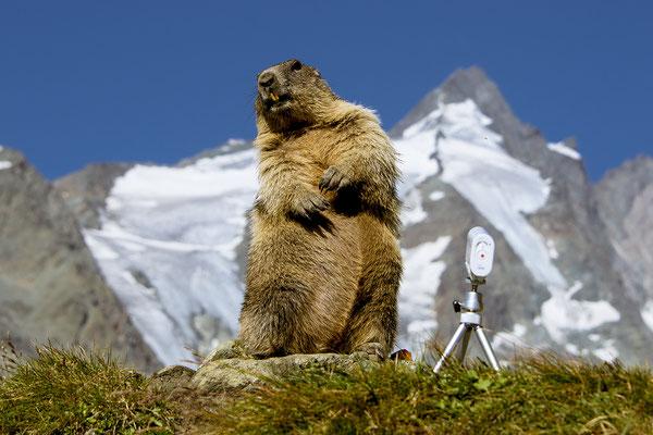 Ich bin so schön, ich bin so toll, ich bin das Murmel aus Tirol, Foto: Bernhard Lang