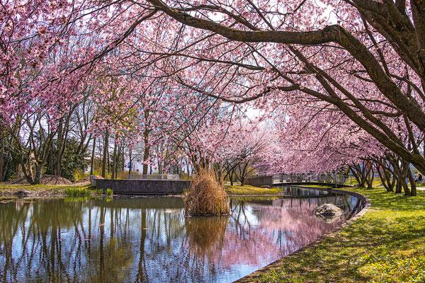 Bild 08; Park, Foto: Zaneta Weidner