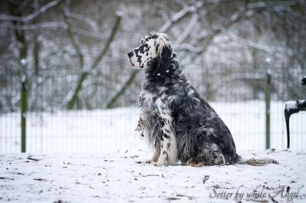Elmondo im Schnee