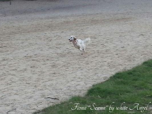 """Fiona """"Senna"""" by white Angel, zwei Jahre alt"""