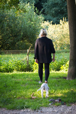 by white Angel English Setter (Foto:VISOVIO)