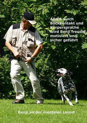 Traumberuf Hundetrainer/in