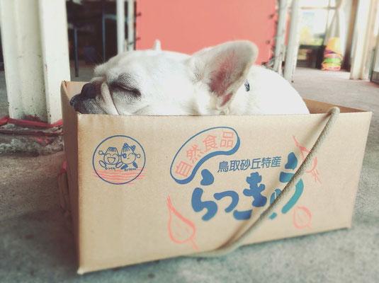 看板犬リリー とてもおとなしくいい子ですが、アレルギー等犬がダメな方は予めお知らせください。