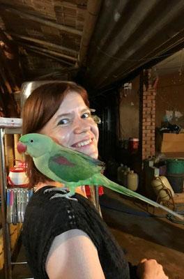 Ein Papagei - Jeder sollte einen Vogel haben