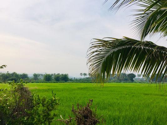 Landleben bei Chiang Rai - sattes Grün