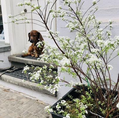 Neue Pflanze vor der Galerie, Vara schaut zu