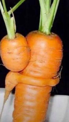 Dieses Möhren-Paar hat Conny im Kurs entdeckt
