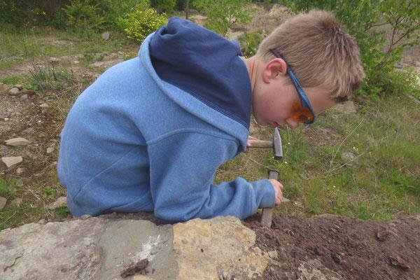 Mit Hammer und Meißel auf Fossiliensucghe