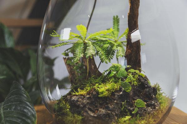 die baiosphere xl pflanzenterrarium