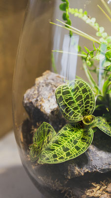 die baiosphere  ein leuchtendes biotope im glas