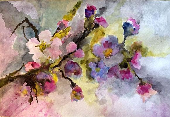 Apfelblüte, Aquarell, 30x40, € 100,00