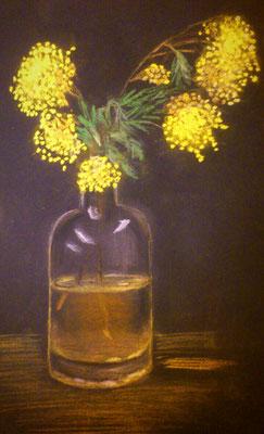 Mimose, Pastellkreide, 24x40, € 30,00