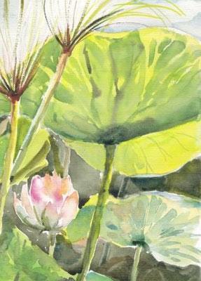 """""""Lotus"""", Aquarell, 30x40, € 100, 00 verkauft"""