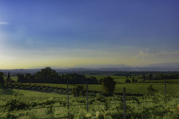 I campi nelle vicinanze di San Martino della Battaglia
