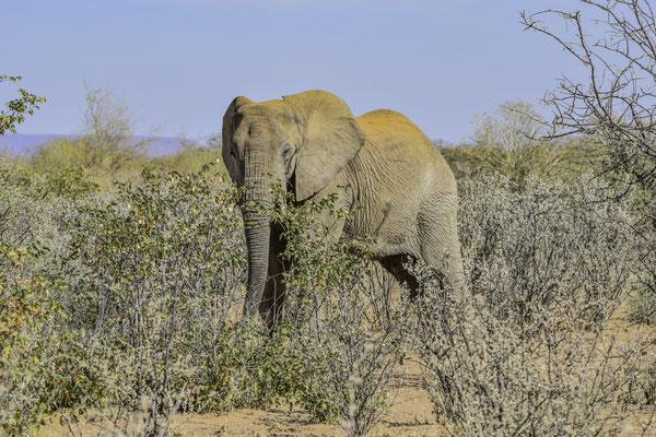 Dmaraland - Elefanti del Deserto