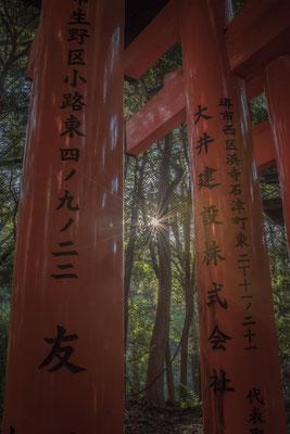 Il Sole filtra nella foresta del Fushimi Inari