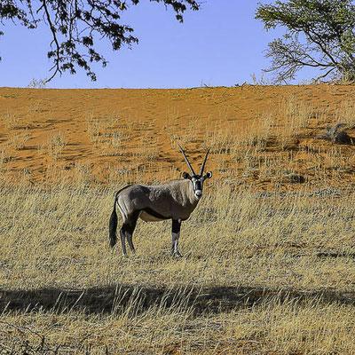 Namibia - Deserto del Kalahari