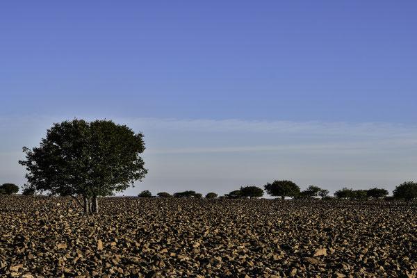 Damaraland - Grootberg Plateau