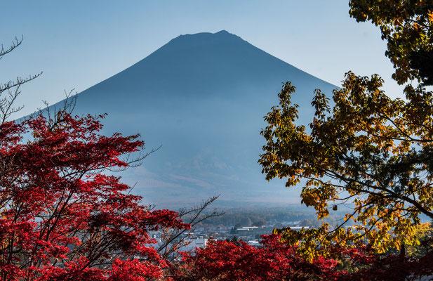 Monte Fuji incorniciato dal Momijigari