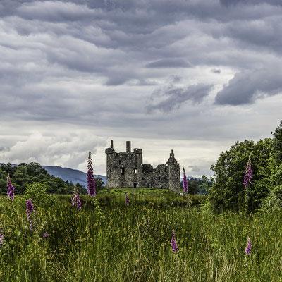 Il Kilchurn Castle tra i cardi