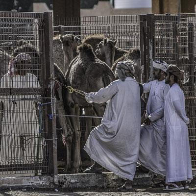 Emirati - Suq dei Cammelli