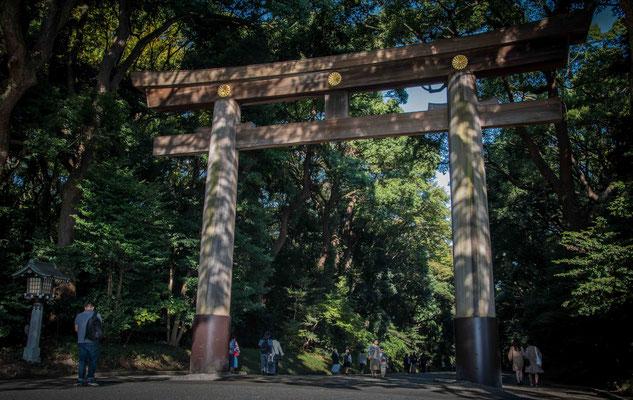 Meiji Jingu - Torii di ingresso