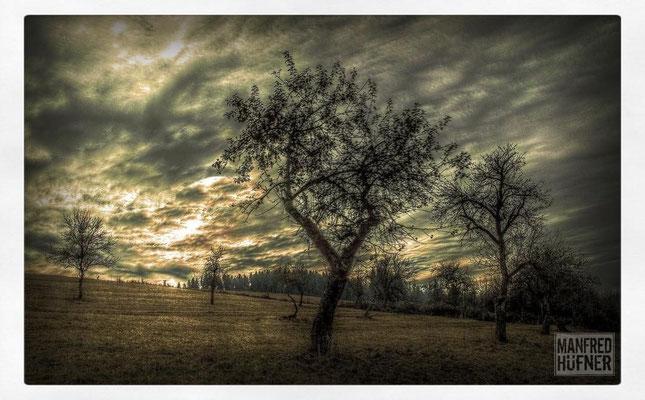 Herbstnachmittag in Horgen (WT)